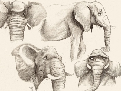 sheepish pachyderm illustration elephant childrens book sketch pencil sketch character design