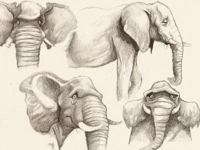 sheepish pachyderm illustration elephant childrens book sketch pencil sketch character design