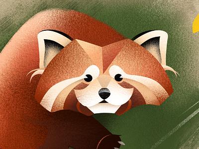 firefox illustration animals red panda firefox childrens book illustration
