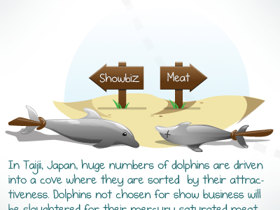 Dolphin Cycle Section dolphin cycle vector illustration drawing sign aubrey hadley beach sand