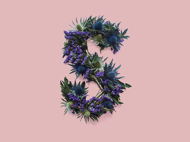 Thistle Typography photography scotland thistle flowers type typography