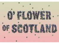 O' Flower of Scotland Typography