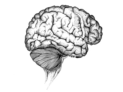 black and white brain illustration brain white and black thin lines dotwork