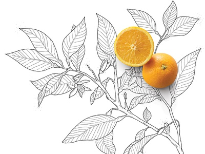 orange leaf illustration dots lines thin blackandwhite natural leaf orange illustration