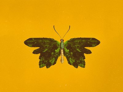 CRYSTALFLY #5 nature green illustration art collage animal fly butterfly yellow crystals