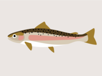 Trout Illustration