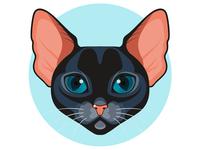 Black Abyssinian cat
