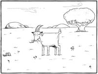 Goat eats glasses