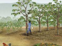 Equal Exchange, Plant A Tree