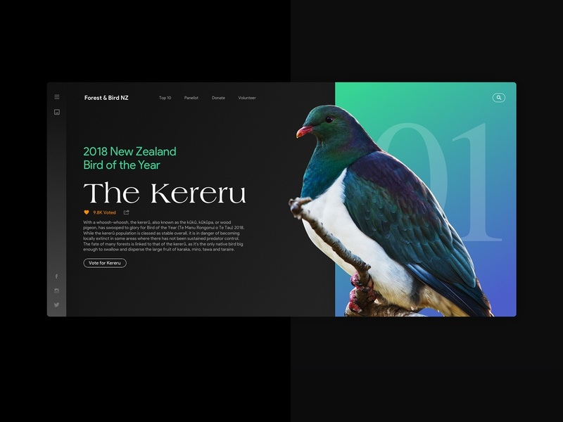Bird of the Year website concept sketch photoshop webdesign website design ui interface