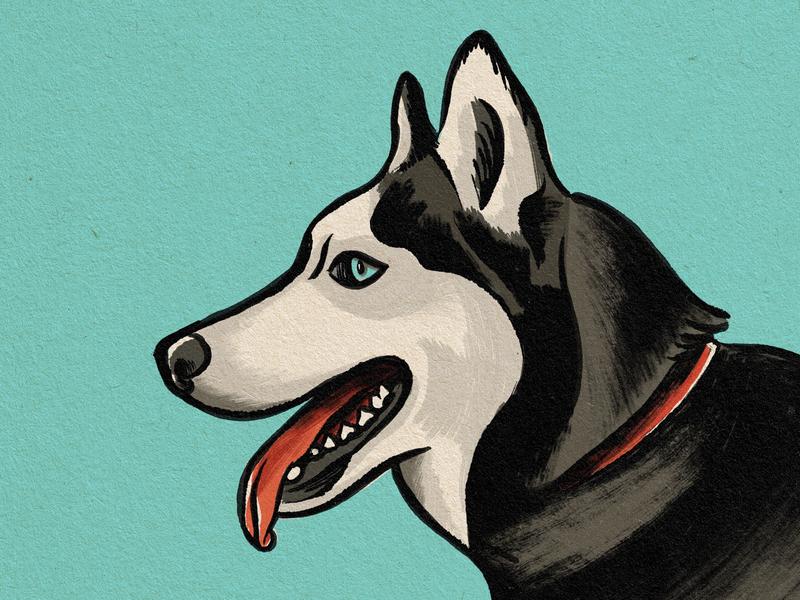 Arya Sketch husky dog vintage texture brush sketch drawing procreate illustration design art