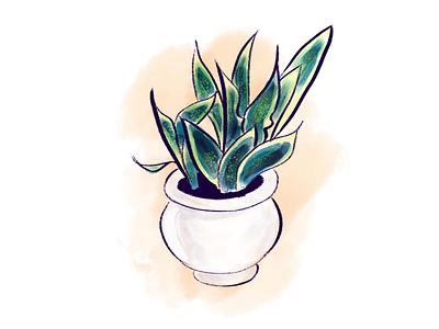 Snake Plant drawing watercolor illustration digital photoshop art illustration