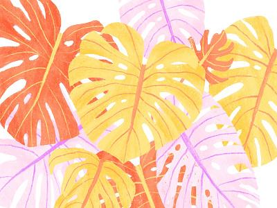 Monstera jungle nature textile pattern yellow pink hand drawn ipad pro procreate plant tropical house plant monstera botanical illustration