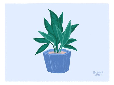 Another Houseplant