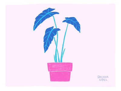 Color Play plants hot pink home decor planter houseplant leaf leaves photoshop wacom plant ipad pro illustrator procreate hand drawn botanical illustration