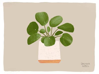 Pancake Plant plants greenery texture neutrals house plant photoshop plant ipad pro procreate hand drawn botanical illustration