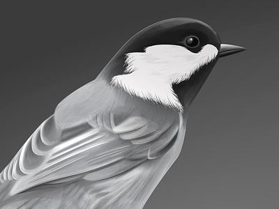 Vector Bird animal bird vector illustration grey