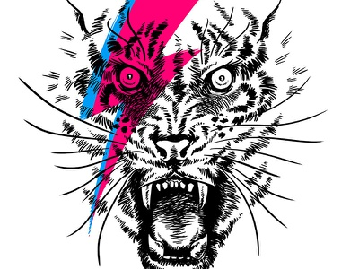 Tiggy Stardust tiger bowie illustration animal drawing david bowie ziggy stardust