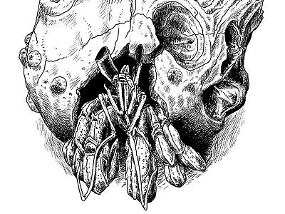 Hermit Crab crab creature animal skull illustration draw drawing art hatching hermit crab cross hatching