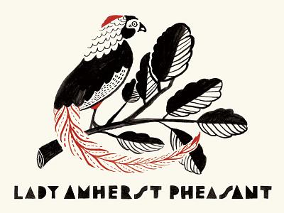 Birds Aplenty birds lettering illustration