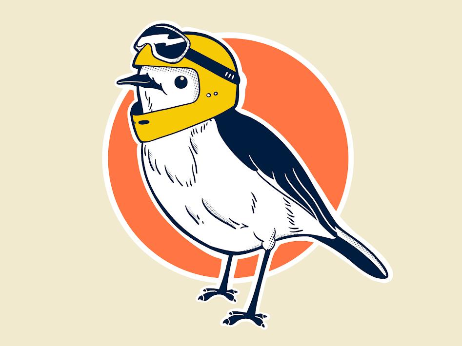 Racer Robin bird robin procreate digital illustration illustration