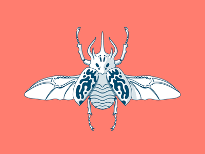 Rhino Beetle graphic beetle illustration digital illustration