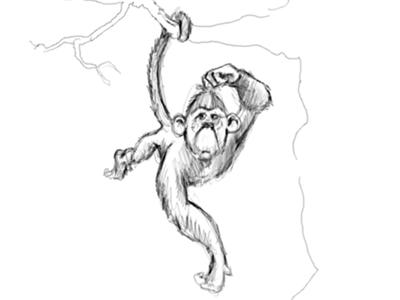Monkey sketch monkey