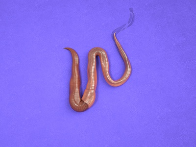 W = Worm