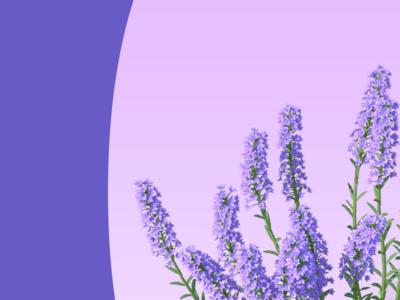Lavender Poster tim tourtillotte orbital visual llc poster art poster flowers typography