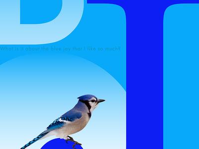 Blue J Poster tim tourtillotte orbital visual llc poster art poster blue jay typography