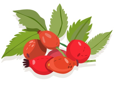 Rosehip rosehip berries fruity forest patterns marushabelle