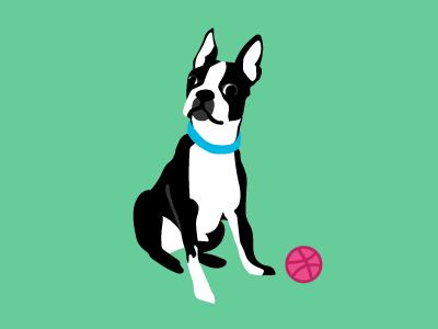 Let's play! derp dog illustration debut boston terrier
