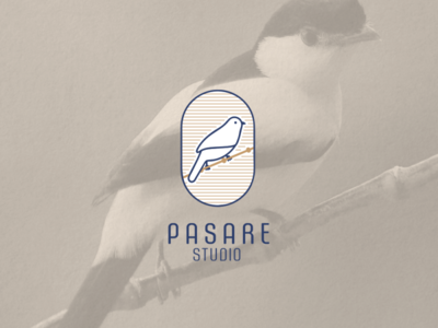 Pasare Studio - Logotype logotype bird logo bird icon typography vector branding design illustration logo