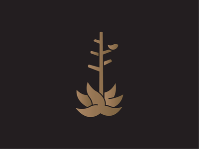 Century Plant Fidelity Study line gold photography photo texas tx marfa yucca agave plant century vector branding logomark digital design simple illustration logo minimal