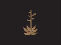 Century Plant Fidelity Study