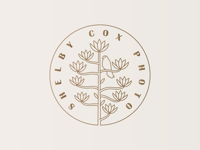 Shelby Cox Photography Logo lineart monoline hawk photoshop photography kestrel century plant agave typography marketing icon vector logomark branding digital design logo simple illustration minimal