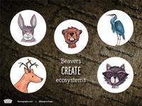 Beavers create Ecosystems, Designers create economic ecosystems
