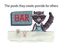 Ponds They Create Raccoon Bar082017