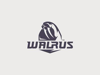 Walrus mammal minimal tusk sea walrus animal illustration branding mark logotype design logo