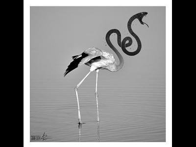 Hybrid series mixed media photography reptile bird flamingo illustration snake