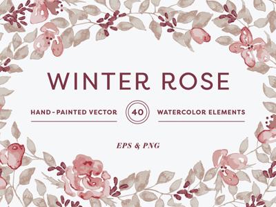 Winter Rose creative market invitation design painted blush pink illustration vector watercolor clipart flower floral