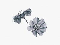 Digital Floral Illustration