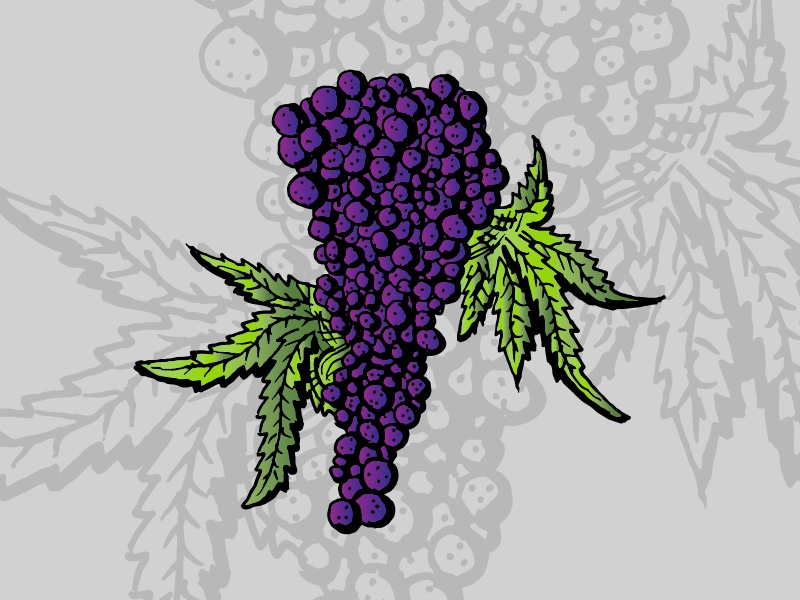 Grapes • Strain Illustrations