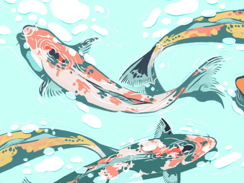 Koi Color Study sketch drawings drawing fish ipad procreateapp procreate art procreate japan colorful colors koi fish illustrator illustration design colorpalette color koi color study