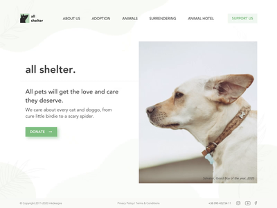 Animals Shelter Landing Page webdesign web  design website web