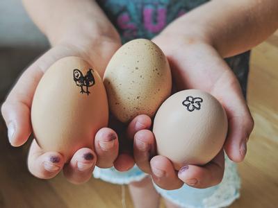 Kenley's Farm Fresh Eggs