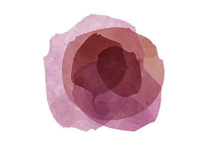Wine Flower shades red blend petals transparency mark pink rose flower wine stain