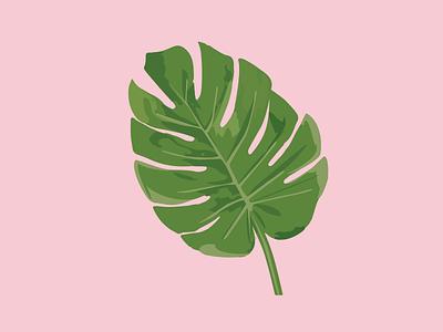 Cheese-plant illustration  botanical foliage vector illustration