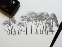 Row of Scotts Pine Trees