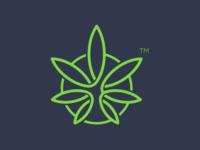 Marijuana Leaf Concept
